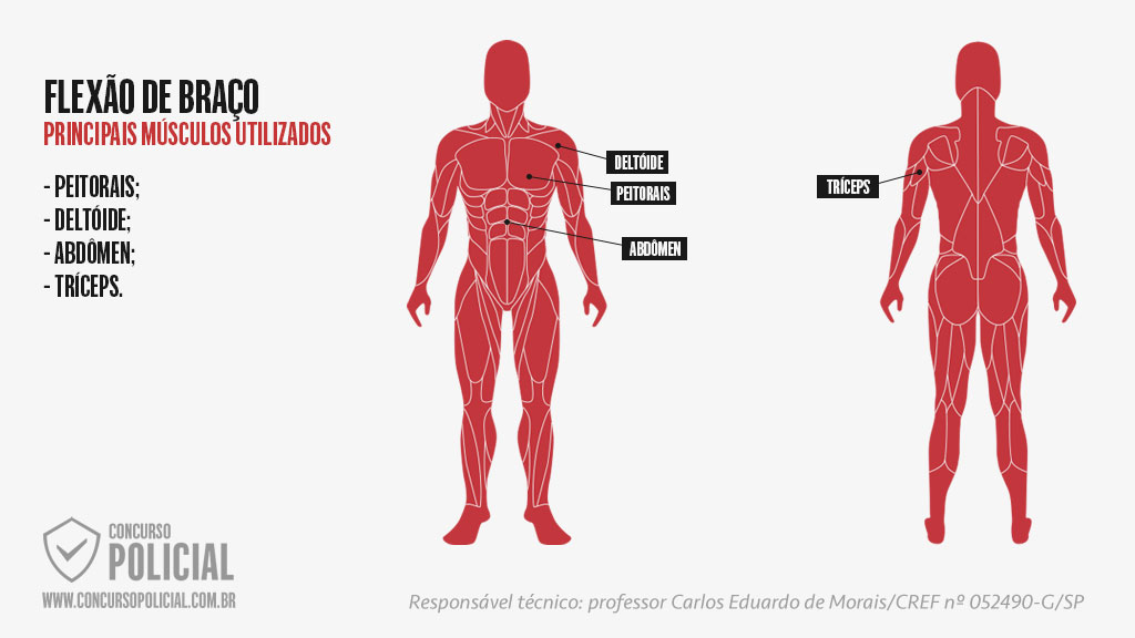 Musculatura utilizada na flexão de braço